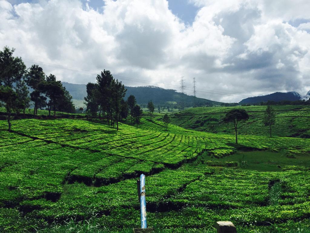 Wayang Windu Geothermal Power